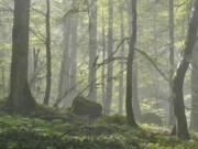 درخت ۵ میلیاردی با ۱۰ میلیون تومان جریمه