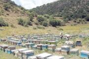 چالش بر سر حق گردهافشانی زنبورها