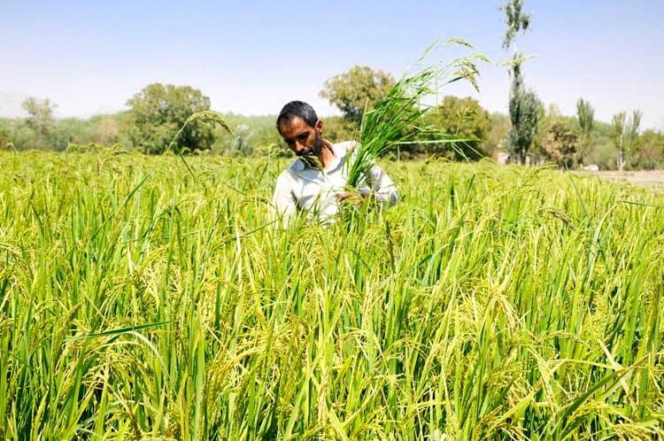 2 راهکار افزایش بهرهوری در کشاورزی یزد