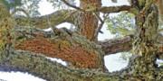 ۴۰ درصد از درختان پارک ملی گلستان خشک شدند