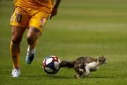 عکس روز: گربه در میدان فوتبال