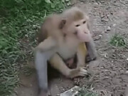 جانوران غیربومی را در جنگلها رها نکنید