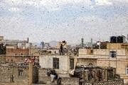 عکس روز: شکار ملخها