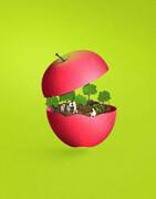 بفرمایید از سیب تابستان لذت ببرید!
