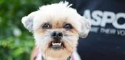 نکته بهداشتی: پیشگیری از گاز گرفتن سگ