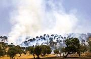 آتش در جان جنگلهای ایلام