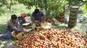 کمبود آب کشاورزی در اصلاندوز