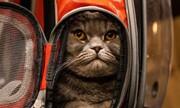 عکس روز: گربه در نمایشگاه مد