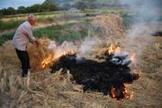 سلطه آتش جهل بر کشاورزی و طبیعت