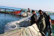 پرورش ماهی در قفس کمبودها