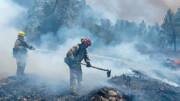 هشدار صلح سبز به گسترش آتشسوزی جنگلی در سیبری