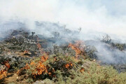 جرقه افتاد؛ ۶ هکتار از جنگلهای سوهانک سوخت