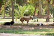 تحویل۸۰ قلاده سگ بیصاحب به حامیان حیوانات در تهران