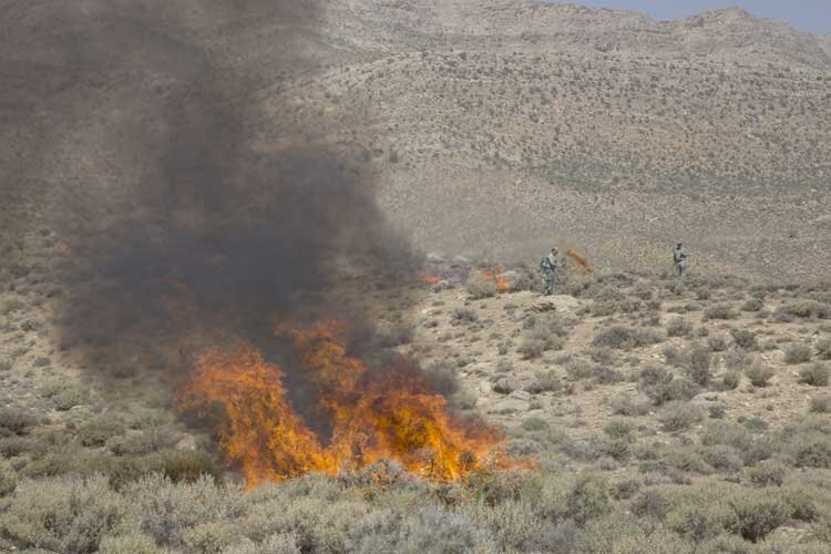 منابع طبیعی طالقان؛ رکورددار آتشسوزی