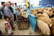 برپایی جایگاههای عرضه دام بهداشتی در عید قربان