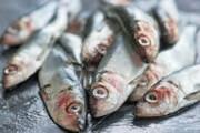 تغییرات اقلیمی عامل انباشت جیوه در خوراکیهای دریایی
