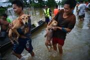 عکس روز: نجات سگها