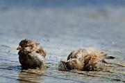 عکس روز: گنجشکها