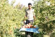 گردشگری کشاورزی در سیوان رونق میگیرد