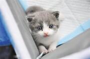 عکس روز: نخستین گربه شبیهسازیشده چین