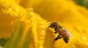 فیلم | تصاویری شگفت انگیز از رویارویی مرغ مگس خوار و زنبور