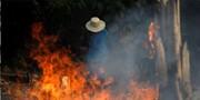 آمازون؛ قربانی آتش