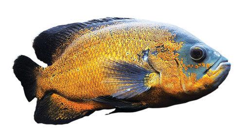 اوقات فراغت ماهیها!