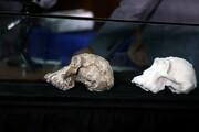 کشف جمجه ۳ میلیون و ۸۰۰ هزار ساله یک انسانتبار در اتیوپی