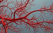 ساخت رگ مصنوعی برای جایگزینی با عروق مسدود قلبی