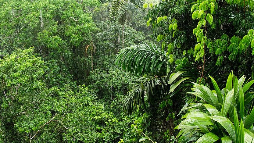 جنگل امازون