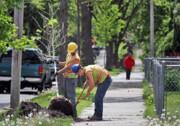 برنامه ایرلند برای کاشت ۴۴۰ میلیون اصله درخت
