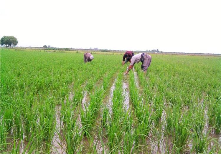 آشنایی با گردشگری کشاورزی
