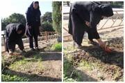 راهاندازی مزرعه خانواده ویژه سالمندان منطقه ۱۴