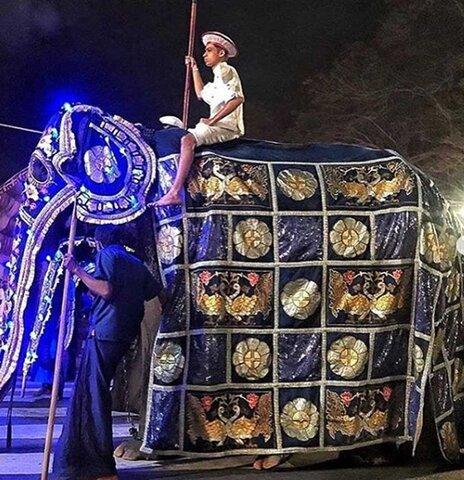 تيكيري، فيل 70 ساله 833