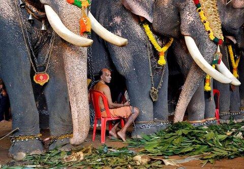 جشن برداشت محصول در هند