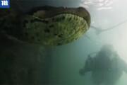 رویارویی غواص با مار ۷ متری ۹۰ کیلویی در برزیل