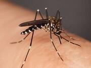 عفونت مالاریا ریسک نارسایی قلبی را افزایش میدهد
