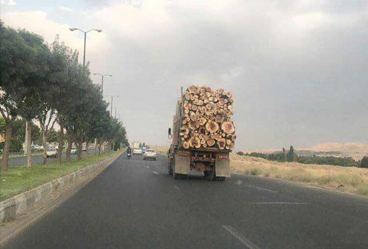 انتقال درختان قطع شد