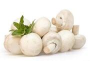 مصرف قارچ خطر سرطان پروستات را کاهش میدهد