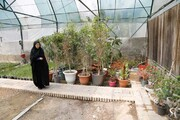 غرس بیش از هزار اصله نهال در خیابان شریعتی