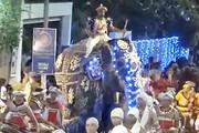 سریلانکا | حمله  فیل به جمعیت