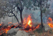 ۱۸۸ هکتار از جنگلهای دنا تابستان امسال طعمه حریق شد