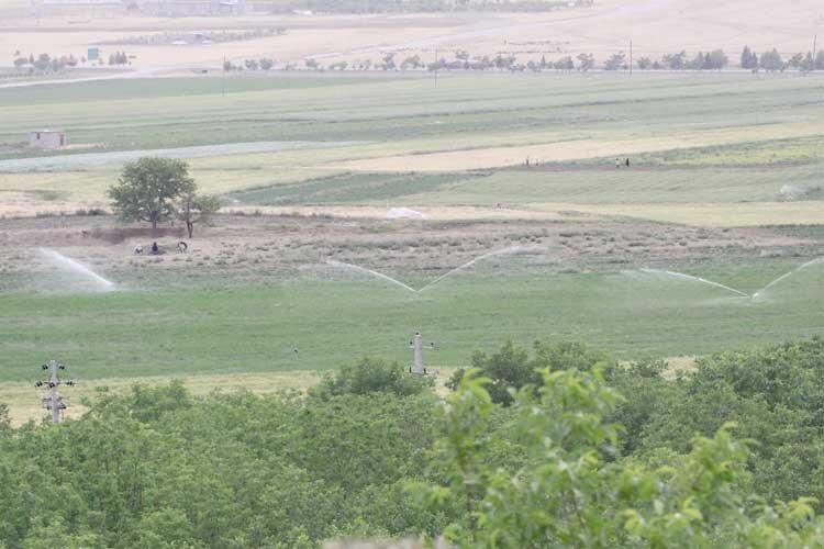 پیشگامی اصفهان در توسعه آبیاری نوین
