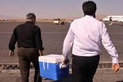 نهمین قلب پروازی از تبریز به تهران منتقل شد