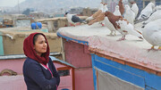 فیلم محبوب آنجلینا جولی نماینده افغانستان در اسکار شد
