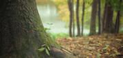 خطر انقراض در کمین ۵۸ درصد از گونههای درختی اروپا
