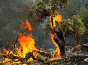 افزایش خسارت آتشسوزی جنگلها در پی عدم تخصیص بالگرد