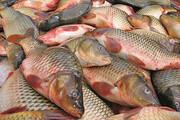 کاهش ۳۰ درصدی قیمت ماهی