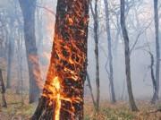 پیشگیری از آتشسوزی جنگل با کمک یک ژل سازگار با محیط زیست