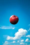 سیبت را جا نگذاری